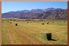 mc sv hay field
